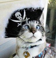 UnshippedOwlcat